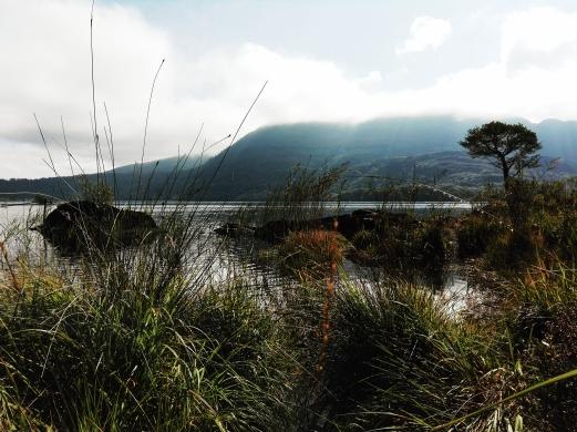 Killarney Nationalpark Irland Natur